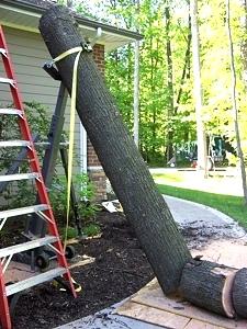 Tree on House