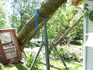 Portable Tree Jack | Tree Hugger